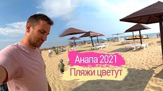 Влог Уезжаем из Крыма Водоросли и божьи коровки на пляже Анапы