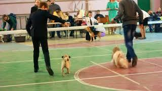 Выставка собак.ЮХ