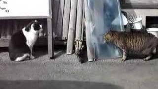野良猫同士のけんかです。