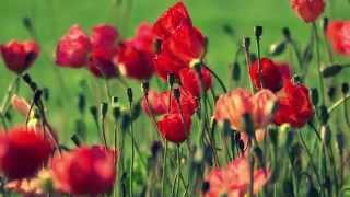Blumen und USA Impressionen