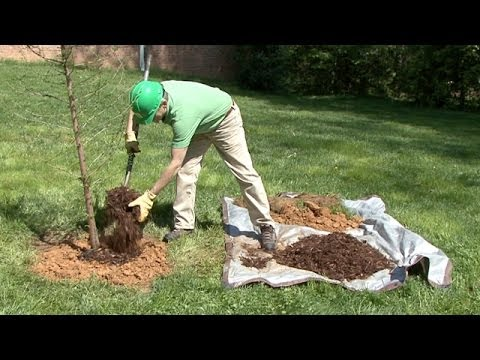 Fertilizing Trees