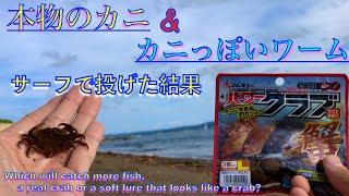 サーフでチニングしたらどっちが釣れるか試しに釣りしてきた【Fishing with a lure shaped like a crab in Japan】