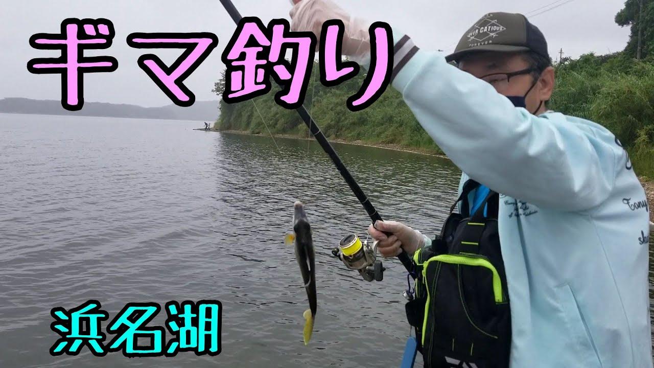 ギマ! 浜名湖で釣れたよ!