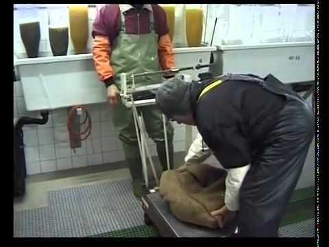 Le Brochet - Inspection de la pêche du Canton de Berne
