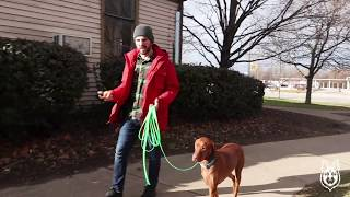 Teaching Your Dog To Come When Called With An ECollar