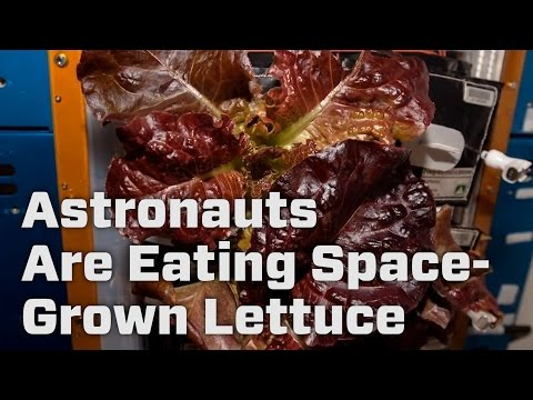 Astronauts Are Tasting Space-Grown Lettuce