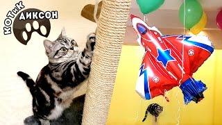 🐾😺  КОТиК ДИКСОН запускает воздушный самолет и шарики.Смешное видео про кошек.