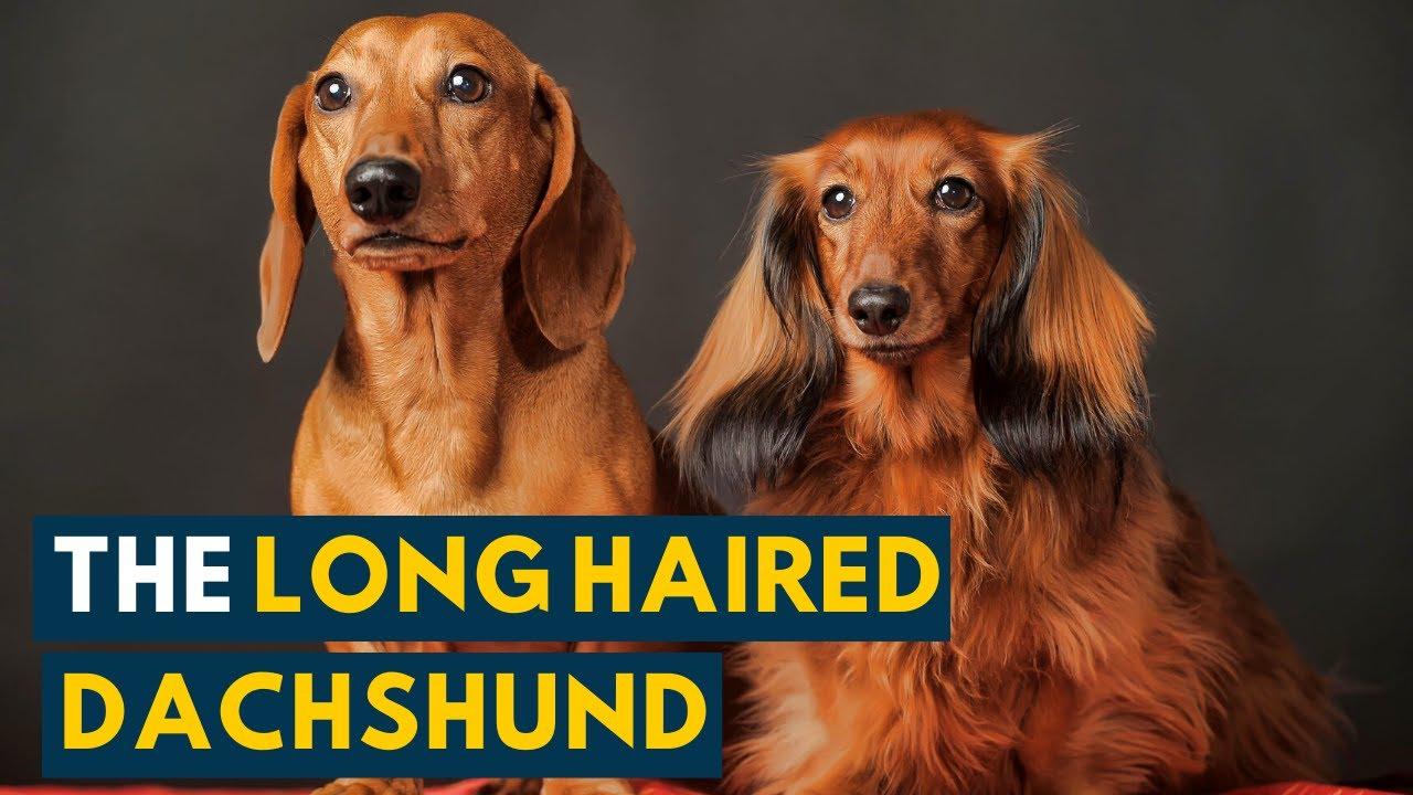 preparate pentru rosturile de dachshund tratarea durerilor articulare cu sare