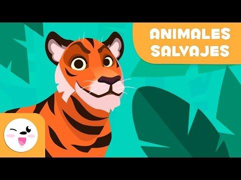 los-animales-salvajes-para-niños---vocabulario-para-niños
