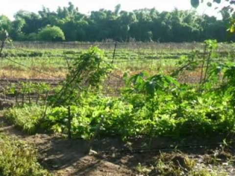 Farming and Produce Businesses in Logan - Park Rid...