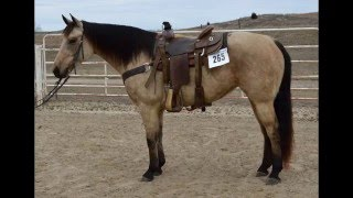 lot 265 snazzy miss drift pitzer ranch 2016 spring sale