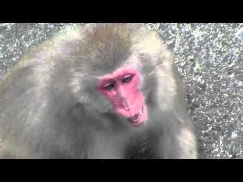 猴子的叫聲 - YouTube