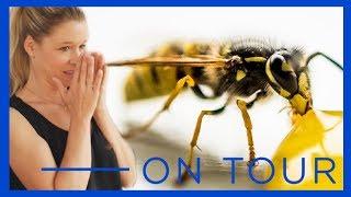 Alles, was Du über Wespen wissen solltest