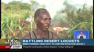 Locust Invasion: Destructive desert locusts cross into Embu from Mwingi