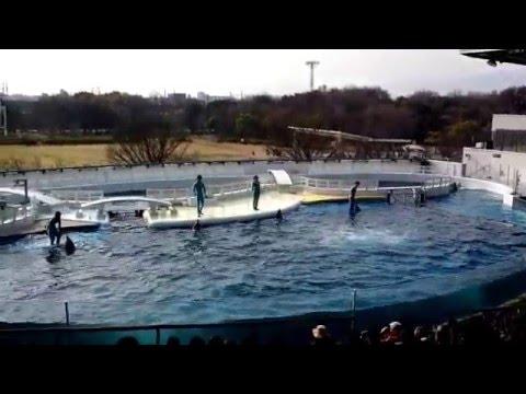 Japan Kyoto Aquatic Stadium Trip 1