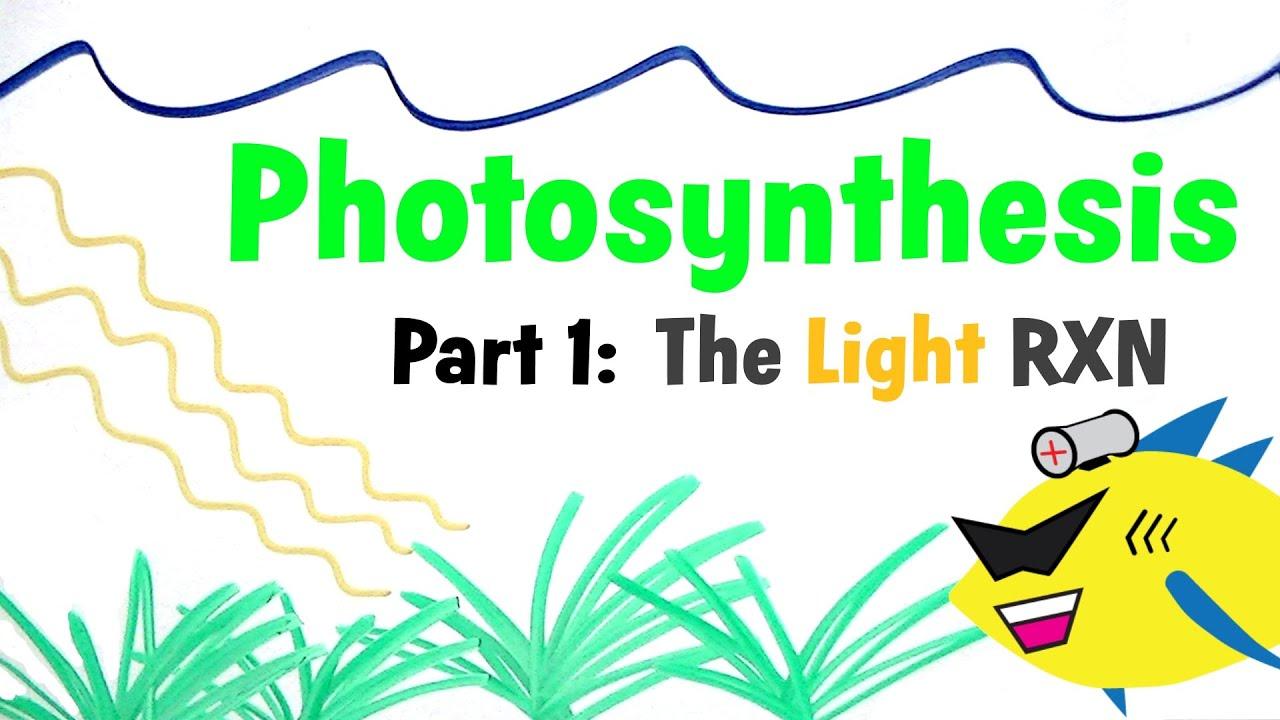 Aquarium synthesis Pt 1 The Light Reaction