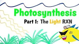 Aquarium Photosynthesis Pt 1: The Light Reaction