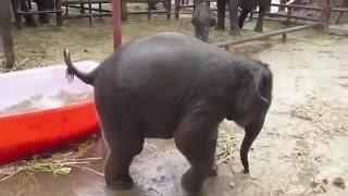 Смешной слоник взорвал интернет