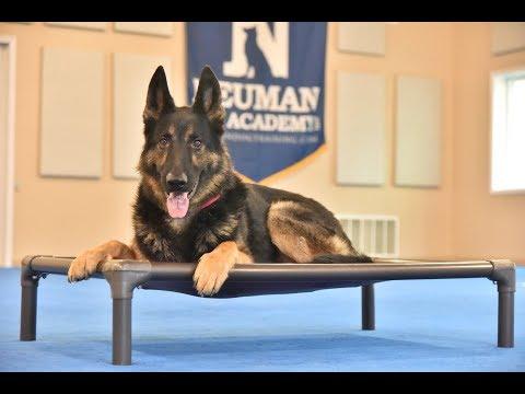 Max (German Shepherd Dog) Boot Camp Dog Training Video Demonstration