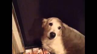 Собака тошнит деньгами