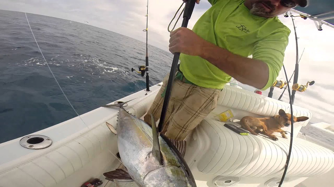 Tuna fishing gulf of mexico youtube for Mexico fishing license