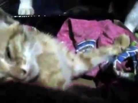 Kitten dies From Dog Attack all the cats cry for thier friend :(