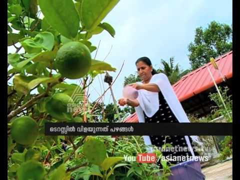 Fruits cultivated on  Terrace Haritham @ Kochi