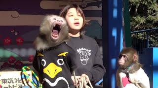 お猿劇場を撮影しました、猿回しの方は鈴木奈央さんです。チャーミング...