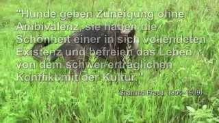 """Unterwegs mit Annabell  -  auf dem Hermannsweg zum """"Hockenden Weib"""""""
