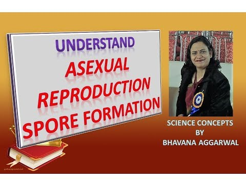Asexual reproduction definition simpleton