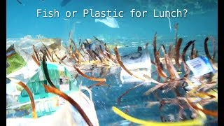 Fish or Plastic for Lunch?