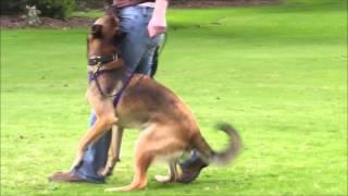 Dog Trainer Taranaki NZ | 0211444368 | Dog Training Auckland New Zealand
