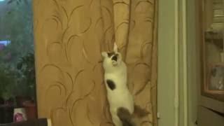 кошка- любительница лазить по шторам