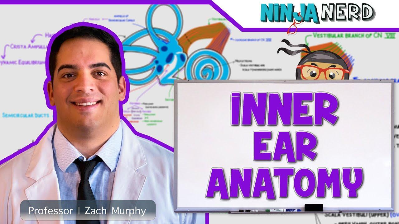 Special Senses Inner Ear Anatomy Youtube