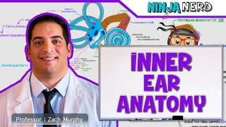 Special Senses   Inner Ear Anatomy