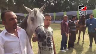 انطلاق فعاليات مهرجان الخيول العربية بـ«جسر السويس»