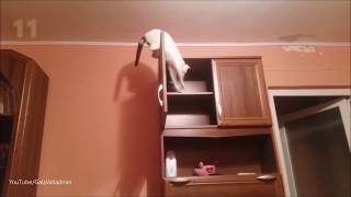 To be continued- Compilation  With cats