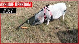 ПРИКОЛЫ 2017 Ноябрь #157 ржака до слез угар прикол - ПРИКОЛЮХА