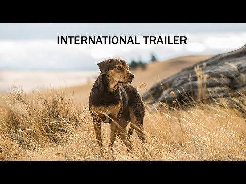 A DOG'S WAY HOME - International Trailer - In Cinemas February 28