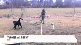 Longieren Mit Hunden - Jennys Hundeschule In Hofgeismar