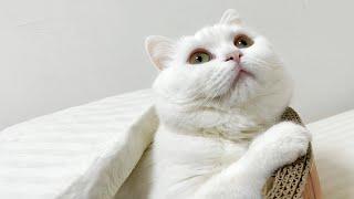 カラスの鳴き声が聞こえたら猫はこうなります!