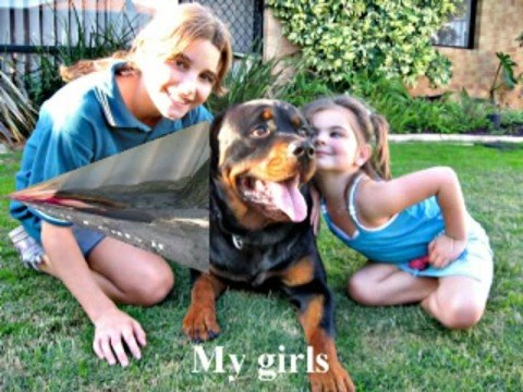 Rottweilers and Kids