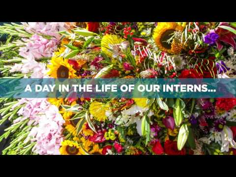 A Day in the Life of Our Interns at Medellin's Flower Festival