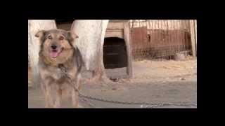 Выставка-раздача домашних собак «Пойдем домой!»