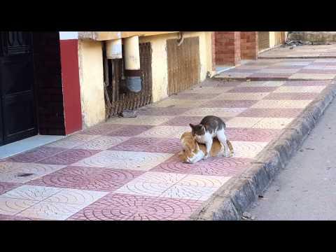 Drole De Chats En Algérie