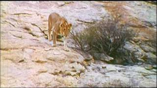 Gambar cover Christian the lion HQ - With unseen footage and sound