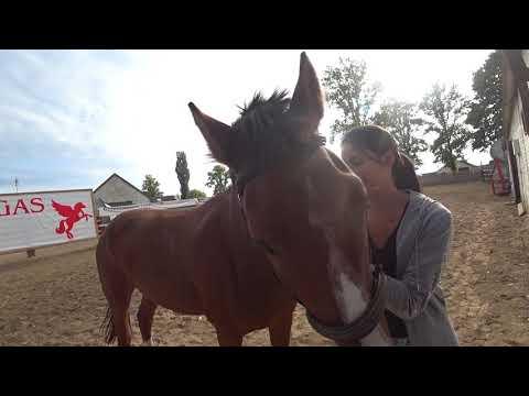 Лечения лошадьми, Конный клуб Пегас ( Брест)