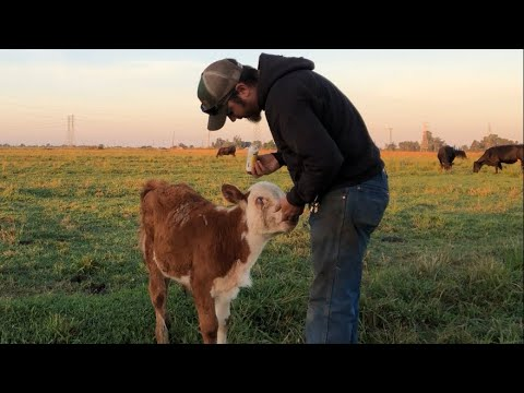 Cows, Pigs, Farming, Family, And A Full Time Job!  How I Do It!