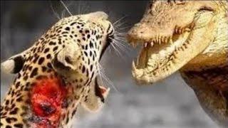 АТАКИ ЛЬВОВ ГЕПАРДОВ ЛЕОПАРДОВ ЖЕСТЬ ОНЛАЙН ATTACK OF WILD CATS VIDEO STREAM COMPILATION(подписаться на канал subscribe to the channel:https://goo.gl/hAnMov АТАКИ ЛЬВОВ ГЕПАРДОВ ЛЕОПАРДОВ ЖЕСТЬ ОНЛАЙН ATTACK OF WILD CATS..., 2017-03-11T18:30:23.000Z)