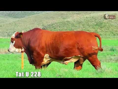 LOTE 05   TAT U228 BRAFORD SÃO BENTO